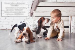 Одежда, обувь и аксессуары Barilotto эксклюзивно в сети детских магазинов Катюша. Собаки для джентльменов из питомника Меркони_9850
