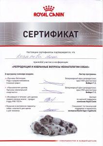 MERKONI BASSET RUSSIA Kozyreva 03 2017