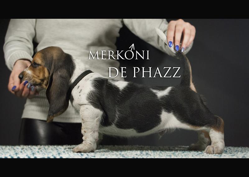 Merkoni Da Phazz 1