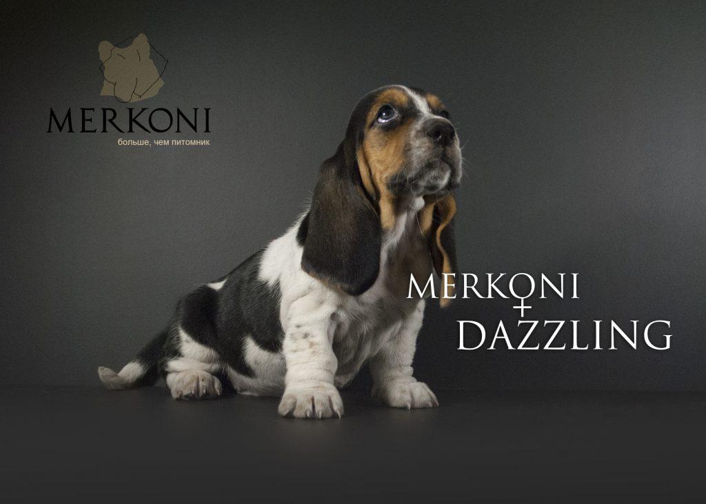 Merkoni Dazzling