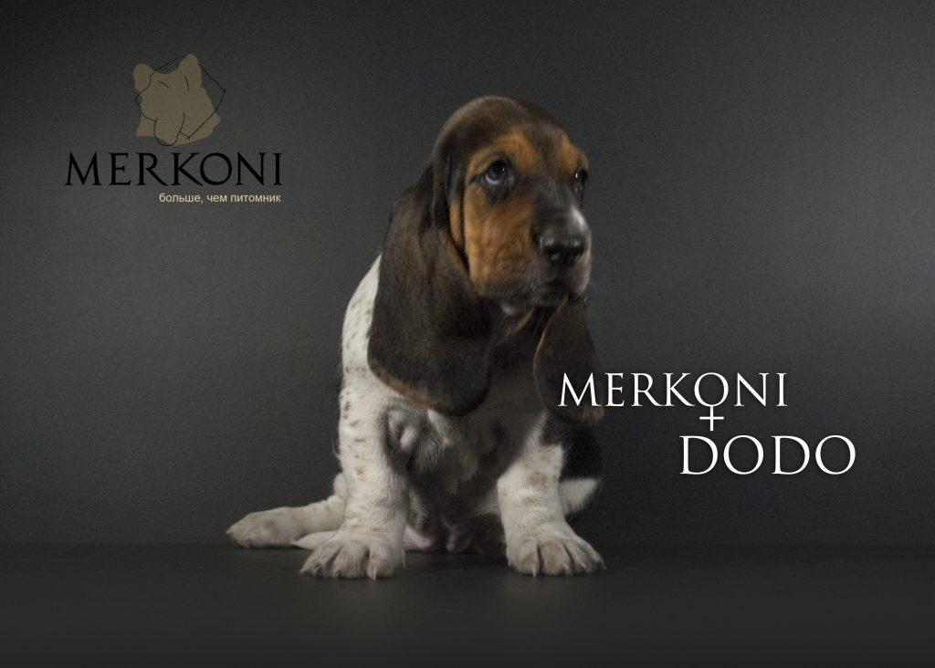 Merkoni Dodo