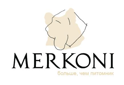 Бассет Хаунд питомник Меркони Merkoni kennel Basset hound